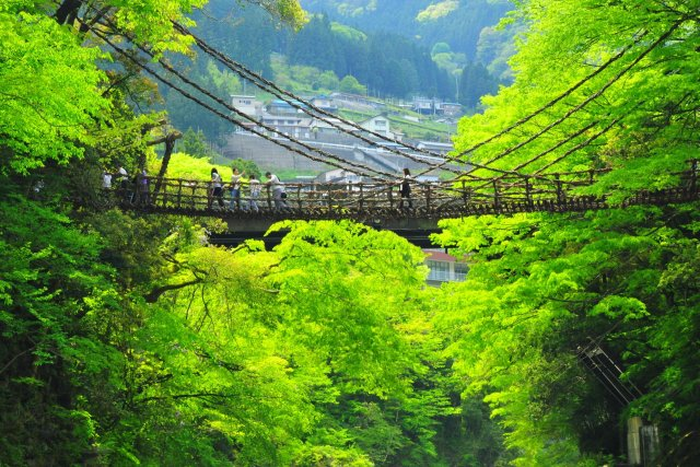 Vine Bridges in the Iya Valley