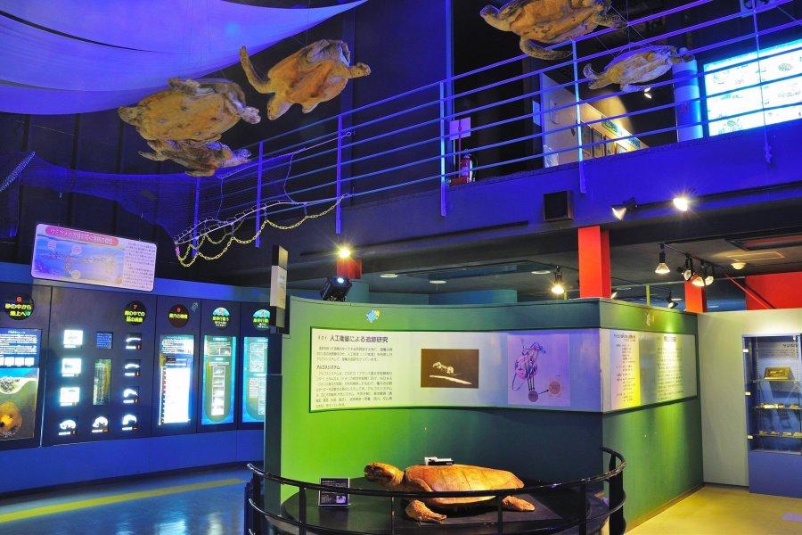 """Sea Turtle Museum, """"Caretta"""" What to See & Do Tourism SHIKOKU"""